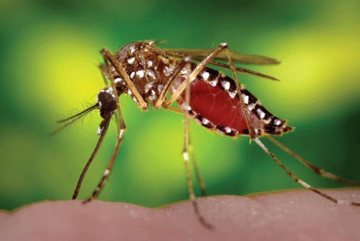 En enero se notificaron 6.310 casos de dengue en Colombia  ¿Qué hacer para prevenirlo?